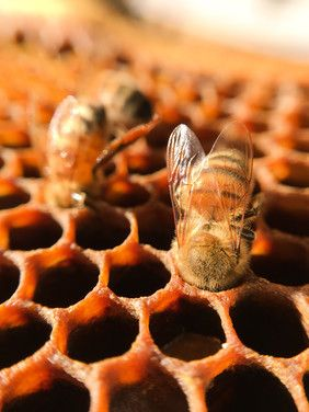 Fake Flow Hives / Counterfeits